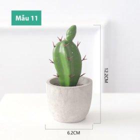 Mẫu 11