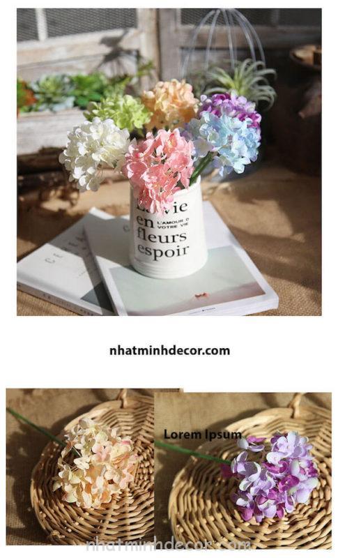 Hoa cẩm tú cầu 19