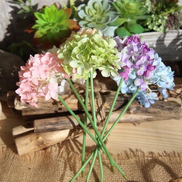 Hoa cẩm tú cầu 12