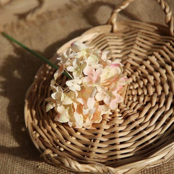 Hoa cẩm tú cầu 16