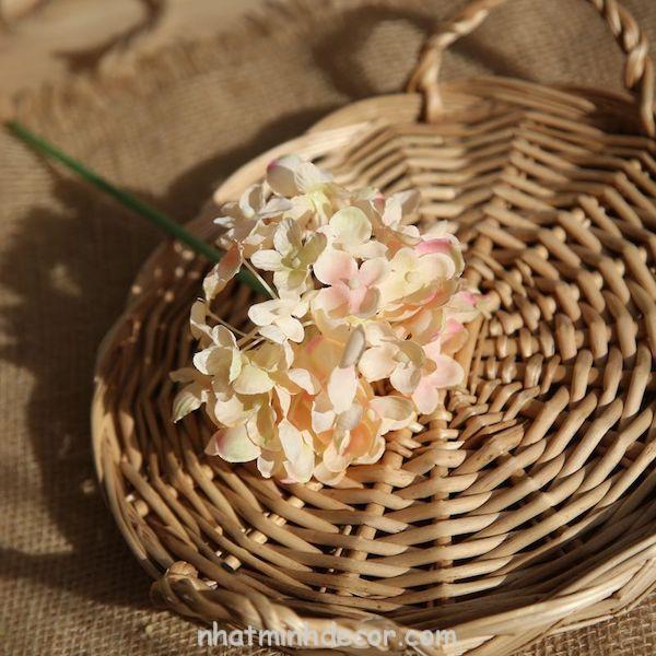 Hoa cẩm tú cầu 7