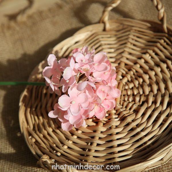 Hoa cẩm tú cầu 9