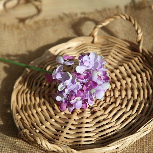 Hoa cẩm tú cầu 17
