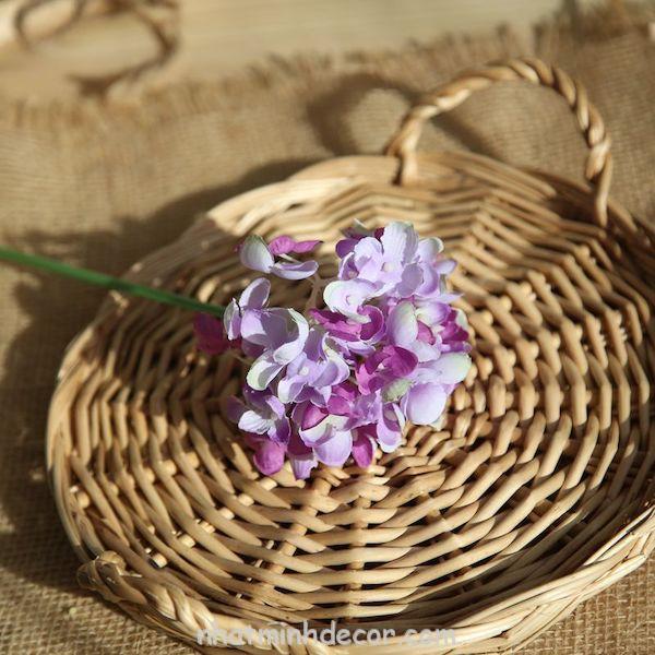 Hoa cẩm tú cầu 8