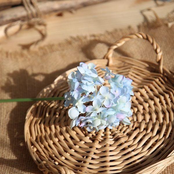 Hoa cẩm tú cầu 15