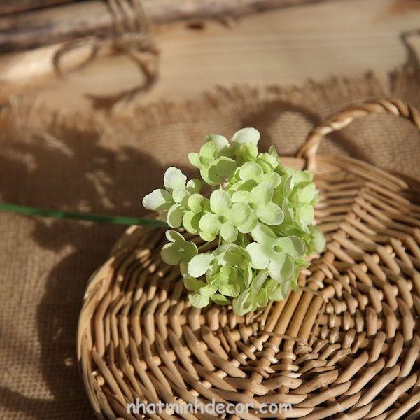 Hoa cẩm tú cầu 5