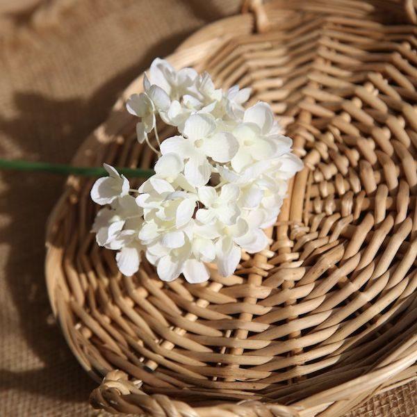 Hoa cẩm tú cầu 13