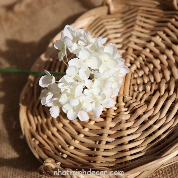 Hoa cẩm tú cầu 4