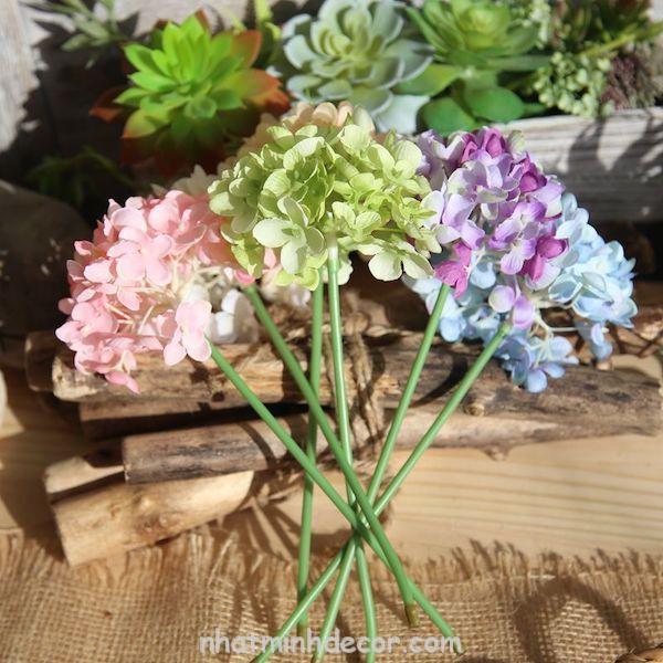 Hoa cẩm tú cầu 3